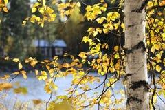 Vue par le branchement de l'arbre de bouleau en automne photographie stock