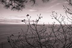Vue par le pin et le figuier sur l'Océan Atlantique avec le filtre violet rouge Image stock