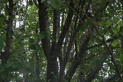Vue par les arbres photo libre de droits