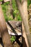 Vue par les branches de l'arbre sur le chapeau d'un grand champignon, une matière inflammable, qui se développe sur un arbre, dan images stock