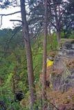 Vue par un enchevêtrement des branches dans la forêt Photos libres de droits