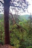 Vue par un enchevêtrement des branches dans la forêt Images stock