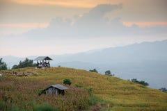 Vue, paysage, égalisant image stock