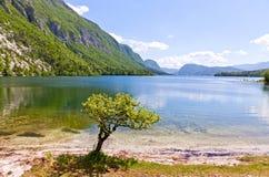 Vue pittoresque de lac Bohinj, Slovénie Photographie stock libre de droits