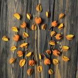 Vue pour le texte et les fleurs sèches des ketmies photos stock