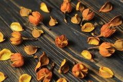 Vue pour le texte et les fleurs sèches des ketmies photographie stock libre de droits
