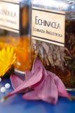 Vue proche d'extrait de centrale d'Angustifolia d'Echinacea Image libre de droits