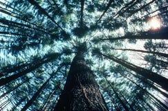 Vue regardant vers le haut des arbres dans la forêt Images stock