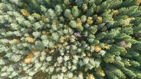 Vue a?rienne de paysage d'automne de for?t d'automne avec les arbres rouges, jaunes et verts Photographie de bourdon photos libres de droits
