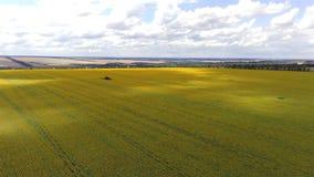 Vue a?rienne des champs agricoles Campagne, paysage agricole banque de vidéos