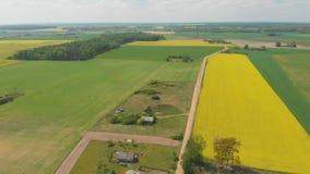 Vue a?rienne des champs du Belarus en mai avec des gisements de graine de colza banque de vidéos