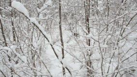 Vue a?rienne du pass? mobile par les arbres neigeux dans la for?t en hiver banque de vidéos