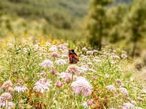 Vue romantique au-dessus d'un pré d'été avec le papillon photo stock