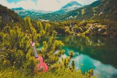 Vue romantique de la guitare d'ukulélé au vert de nature de montagne photos libres de droits