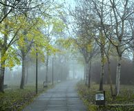 Vue romantique de la petite manière de chemin entourée par des arbres le matin brumeux image libre de droits