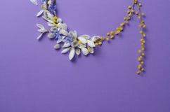 Vue ronde des perce-neige, de la mimosa et des saules de fleurs Composition florale sur le fond violet Photos stock