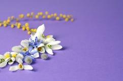 Vue ronde des perce-neige, de la mimosa et des saules de fleurs Composition florale sur le fond violet Photographie stock libre de droits
