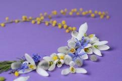 Vue ronde des perce-neige, de la mimosa et des saules de fleurs Composition florale sur le fond violet Photos libres de droits