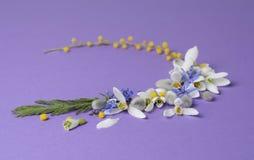 Vue ronde des perce-neige, de la mimosa et des saules de fleurs Composition florale sur le fond violet Images stock