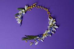 Vue ronde des perce-neige, de la mimosa et des saules de fleurs Composition florale sur le fond violet Photo stock