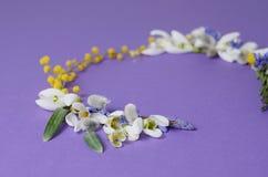 Vue ronde des perce-neige, de la mimosa et des saules de fleurs Composition florale sur le fond violet Image libre de droits