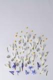 Vue ronde des perce-neige, de la mimosa et des saules de fleurs Vue supérieure de composition florale Image libre de droits
