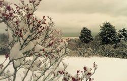 Vue rurale d'hiver Images libres de droits