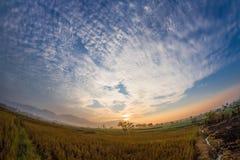 Vue sauvage de matin dans le champ de maïs complètement de la nature Images stock