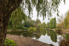 Vue scénique au-dessus d'un étang dans un jardin botanique encadré par un saule pleurant de Babylone images libres de droits