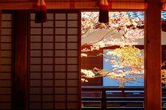 Vue scénique d'un arbre d'érable coloré dans le jardin de cour derrière le shoji coulissant de portes grillagées photo stock