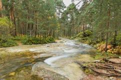 Vue scénique d'une rivière dans la forêt en parc naturel de Boca del Asno un jour pluvieux à Ségovie, Espagne Photos stock