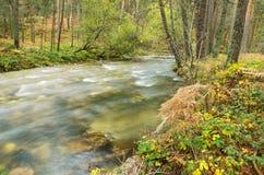 Vue scénique d'une rivière dans la forêt en parc naturel de Boca del Asno un jour pluvieux à Ségovie, Espagne Photographie stock libre de droits