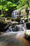 Vue scénique de cascade dans la forêt Image stock