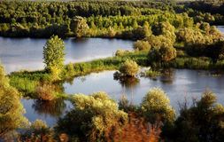 Vue scénique de forêt - Medgidia - Roumanie.   images libres de droits