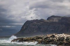Vue scénique de montagne et de rivage dans Kleinmond, le Cap-Occidental, Afrique du Sud image libre de droits