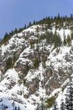 Vue scénique de paysage d'hiver de Forest Mountain Cliffs Covered dans la neige de poudre Photo libre de droits