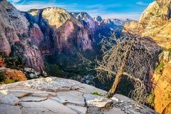 Vue scénique de vallée de montagne en parc national de Zion Photos libres de droits