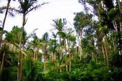 Vue scénique nationale d'EL Yunque Forest Puerto Rico image stock