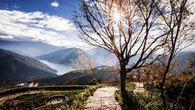 Vue scénique stupéfiante des arbres d'hiver et de la montagne, Taïwan image stock
