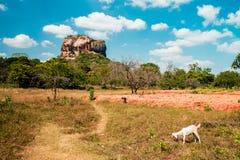 Vue Sri Lanka de Sigiria au soleil de midi photos stock