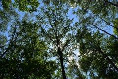 Vue stupéfiante de panorama de la poutre lumineuse du soleil brillant par la branche de l'arbre images stock