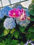 Vue stupéfiante des fleurs multicolores image libre de droits
