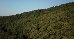 Vue supérieure aérienne des arbres de vert d'été et de la montagne, Caucase, Russie clips vidéos