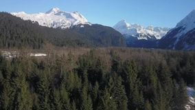 Vue supérieure d'arbre de l'Alaska banque de vidéos