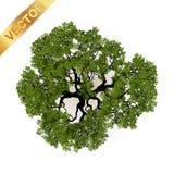 Vue supérieure d'arbres pour l'illustration de vecteur de paysage Images libres de droits