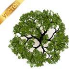 Vue supérieure d'arbres pour l'illustration de vecteur de paysage Photographie stock libre de droits