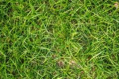 Vue supérieure d'herbe verte fraîche avec la lumière du soleil sur la terre en parc public pour le fond image libre de droits