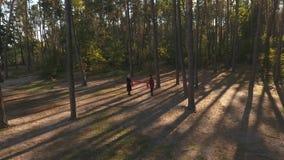 Vue supérieure d'un couple embrassant dans une forêt de pin dans la lumière de coucher du soleil Un couple affectueux a une date  banque de vidéos