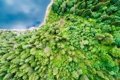 Vue supérieure d'une forêt au bord de lac de la laque Noir, un lac dans les montagnes de VOSGES image libre de droits