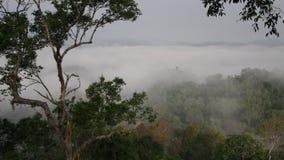 Vue supérieure d'une forêt tropicale dans un brouillard Andreev banque de vidéos